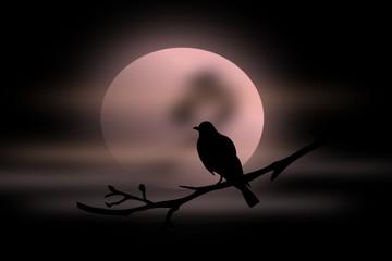 A  Night Bird in moon light