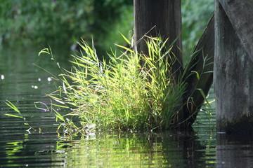 Impression Pflanzen am Wasser