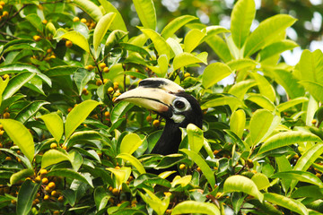 Head of hornbill sitting on a tree in a jungle