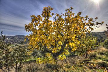 colori autunno campagna 2