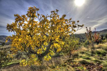 colori autunno campagna 6