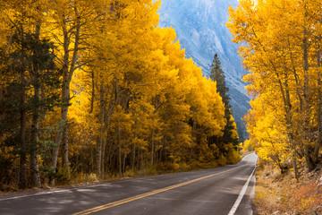 Highway thru Aspen, June Lake, California.