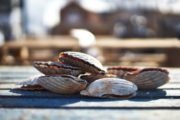 A pile of large shells and urban view in shallow depth of field.