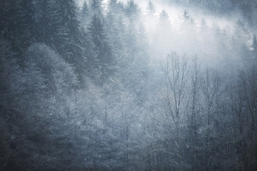 Beautiful snowfall in dreamy and foggy winter forest landscape.