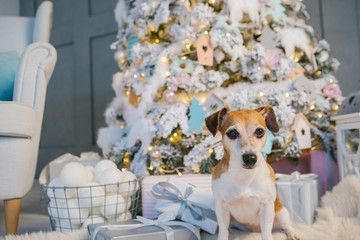Winter holidays with cute dog