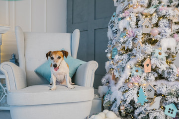 Merry Christmas cute dog. Modern interior room decoration. Pet sitting on the chair.