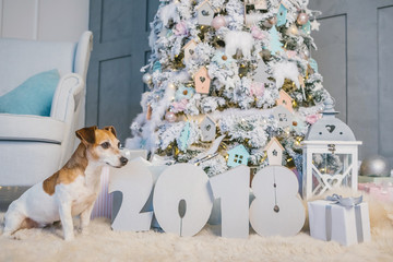 Adorable dog Jack Russell terrier sitting neat to the number 2018. New Year home decoration. Christmas cozy domestic mood. Stylish modern interior decoration