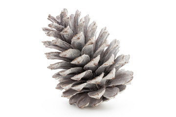 Christmas pine cone on white background.