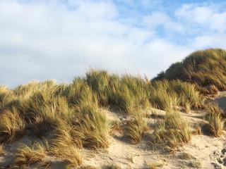Nordseeküste: Dünenkette, Küstenschutz