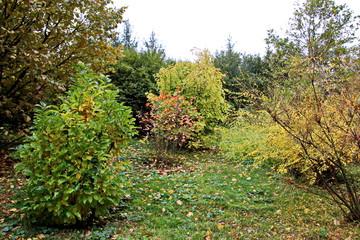 Природа, флора, Ботанический сад и парк Софиевский, г. Умань, Украина