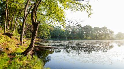 Morning on pond