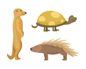 African animals .Turtle Cartoon Vector Illustration isolated