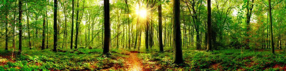 Forest panorama in with bright sun