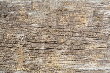 the background of old and rough wooden texture