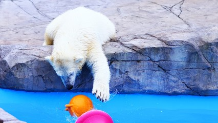 円山動物園の人気者