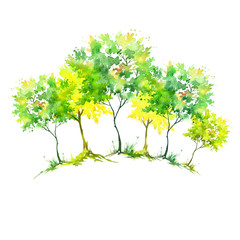 Watercolor painting. Group of green, yellow trees. Summer, autumn landscape