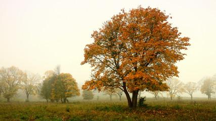Fototapeta jesień na Warmii