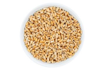 Weizen Getreide Weizenkörner von oben isoliert freigestellt Freisteller