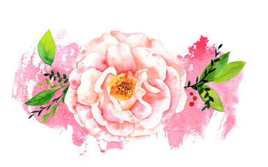 Watercolor rose on pink brush stroke with copyspace