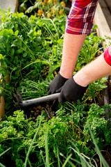 Happy couple gardening