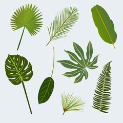 various tropic leaves