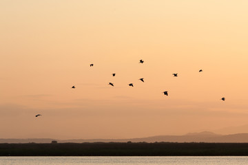 A flock of seagulls in the sky at sunset time.
