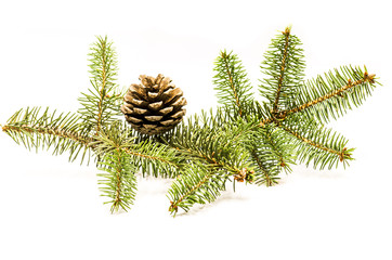 pine cones with fir tree on white