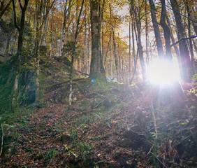 Keuken foto achterwand Bos in mist Forest in the morning