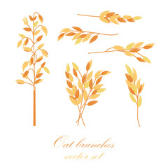 Oat branches set - vector illustration