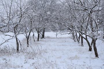 Zima, drzewa pokryte śniegiem