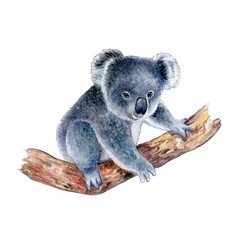 Koala isolated on white background. Watercolor. Illustration. Template. Handmade. Clipart