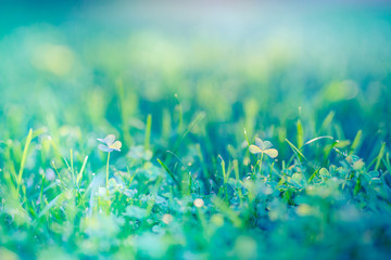 Nature background concept. Beautiful summer nature meadow background. Flowering green meadow on spring sunset light. Bright summer spring nature banner design. Inspirational nature closeup meadow.