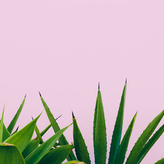 Plant o pink. Outdoors. Minimal design. Fashion for prints
