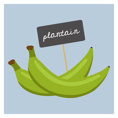 Vector Fruit - Plantain