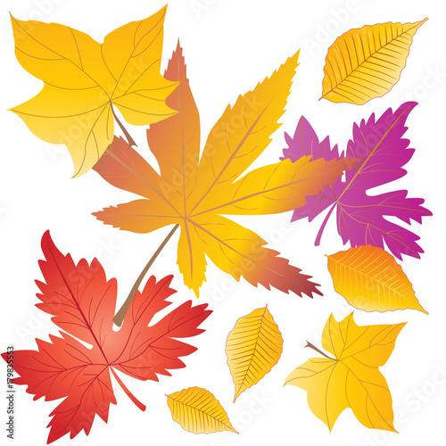 vector autumn falling leavesisolated autumnal foliage fall and