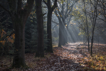 Autumn forest lane with light rays filtered by the trees