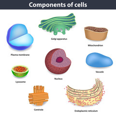 Components of human cells vector illustration