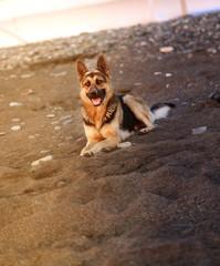 Photo of a beautiful big dog