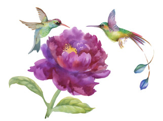Watercolor hand drawn colorful beautiful flower and birds.