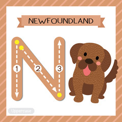 Letter N uppercase cute children colorful zoo and animals ABC alphabet tracing flashcard of Sitting Newfoundland dog for kids learning English vocabulary and handwriting vector illustration.