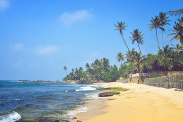 nice landscape with the ocean and palm trees