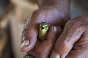 Little bird in hand