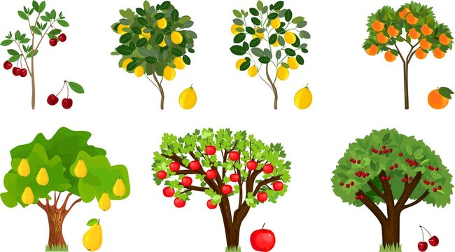 Set of different fruit trees with ripe fruits on white background