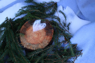 Heart of snow on tree stump and fir tree green branches in autumn park