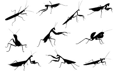 Praying Mantis Illustration Photos Royalty Free Images Graphics