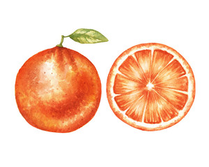Watercolor orange pair illustration in high resolution.