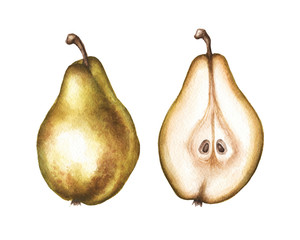Watercolor pear illustration in high resolution.