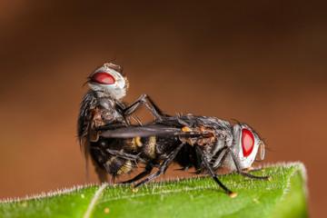 Couple flies on leaf