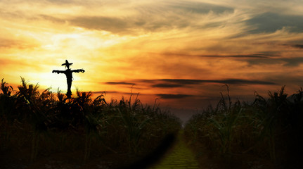 scarecrow at sunset next to yellow brick road