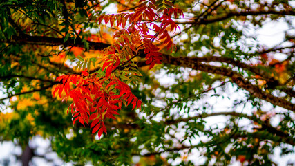 Red and Green Autumn Leaves